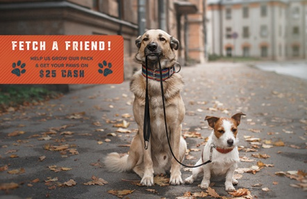 Fetch a Friend!