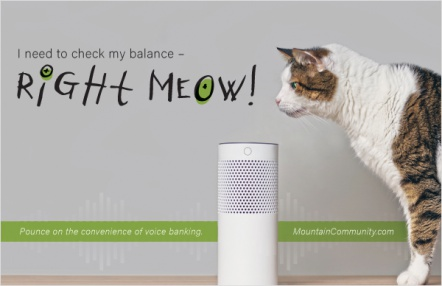 I need to check my balance – right meow!