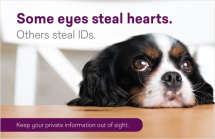 Some eyes steal hearts. Others steal IDs.