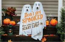 Don't get spooked. Our rates are just scary low!