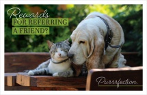 Rewards for referring a friend? Purrrfection.